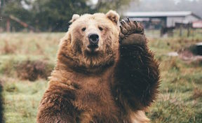 Bear oath1